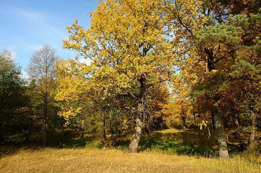 """фото """"Дубовая роща."""" метки: пейзаж, лес"""