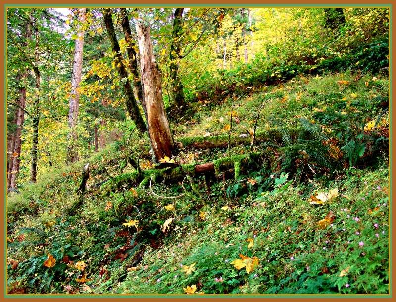 """фото """"осений лес"""" метки: пейзаж, осень"""