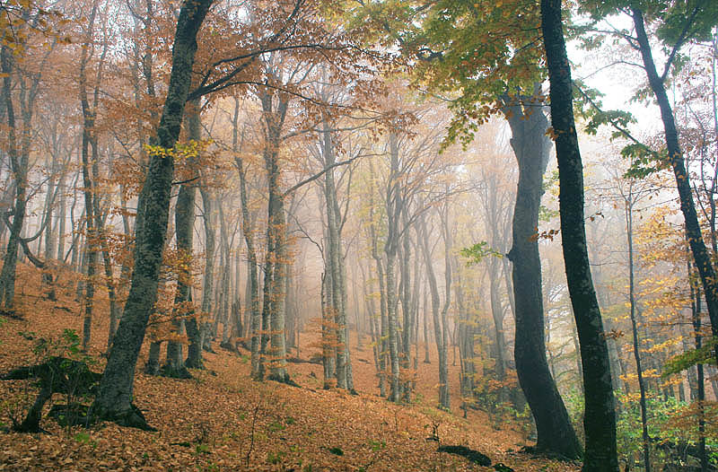 """фото """"Осень в горах Крыма"""" метки: пейзаж, путешествия, лес"""