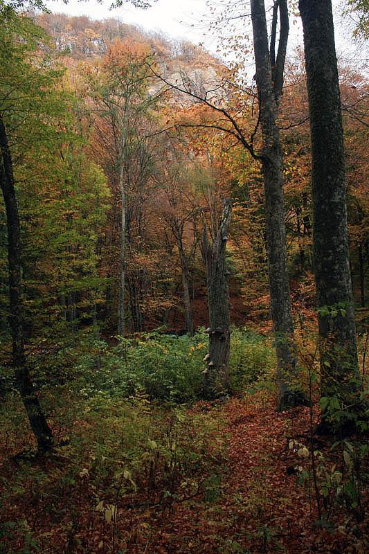 "фото ""Осеннии зарисовки 2"" метки: пейзаж, путешествия, осень"