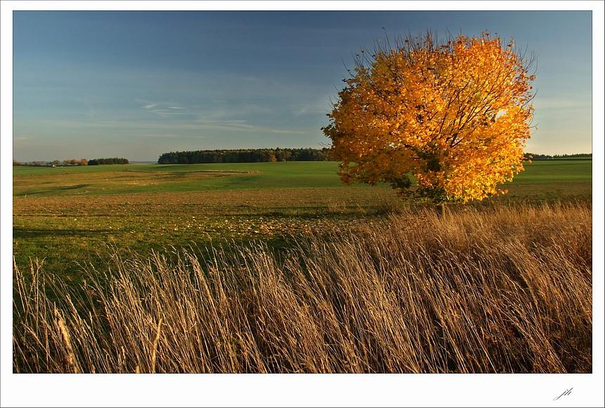 """фото """"in the golden robe ll."""" метки: пейзаж, весна, лес"""