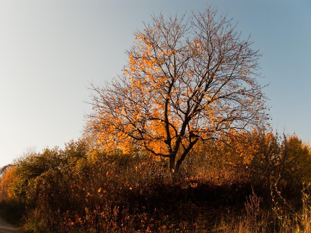 """фото """"Как быстротечна золотая осень..."""" метки: пейзаж, осень"""