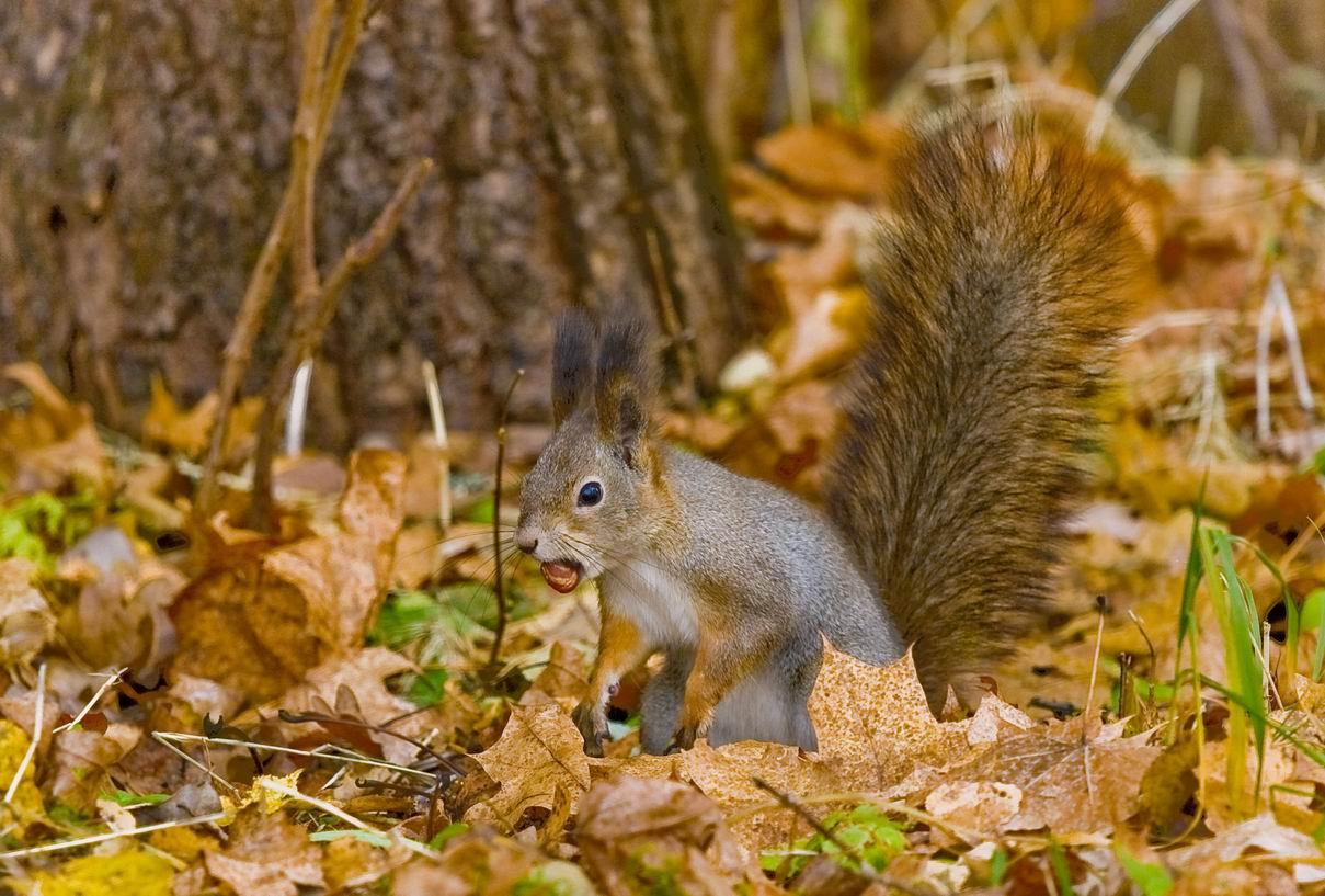 """фото """"Подготовка к зиме"""" метки: природа, дикие животные"""