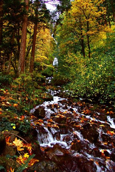 "фото ""А вода по камешкам ....."" метки: пейзаж, лес, осень"