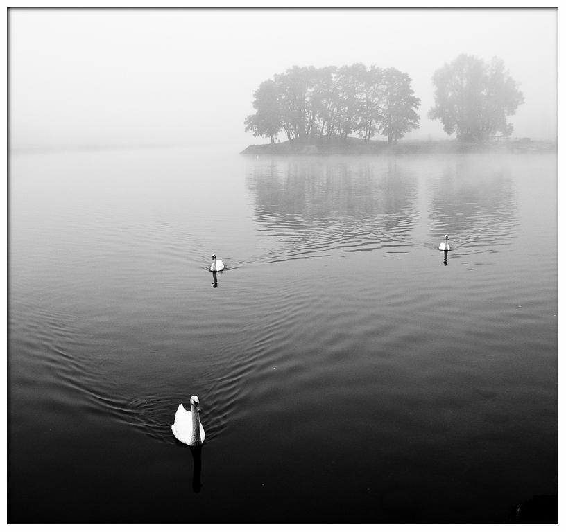 """фото """"Лебединные острова"""" метки: пейзаж, вода"""