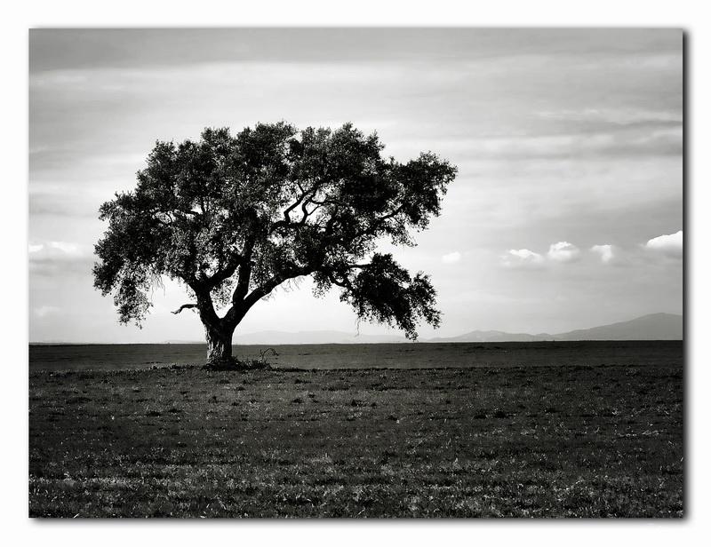 """фото """"Tree"""" метки: пейзаж,"""