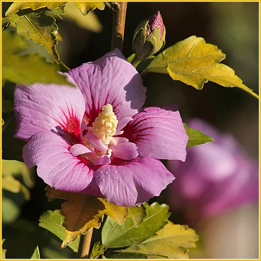 """фото """"Осенние мотивы"""" метки: природа, макро и крупный план,"""