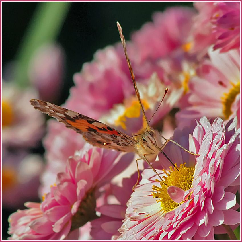 "фото ""Краски осени"" метки: природа, насекомое"