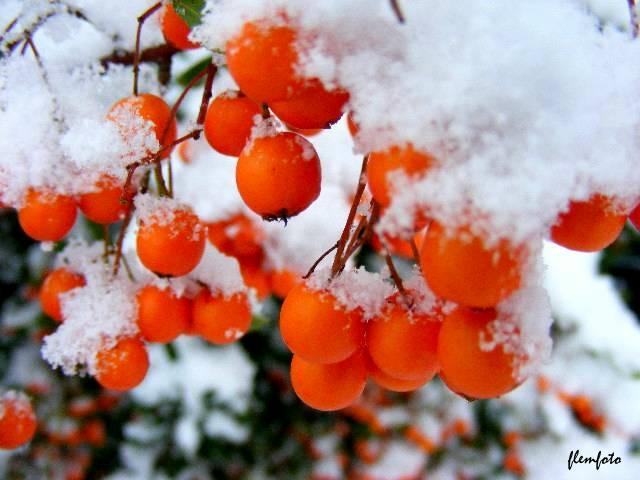 "фото ""Winterday."" метки: путешествия,"