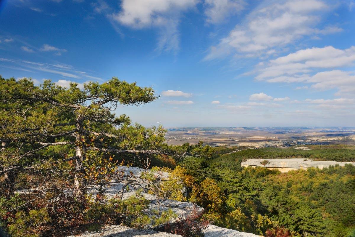 """фото """"И на камнях растут деревья!"""" метки: пейзаж, горы"""