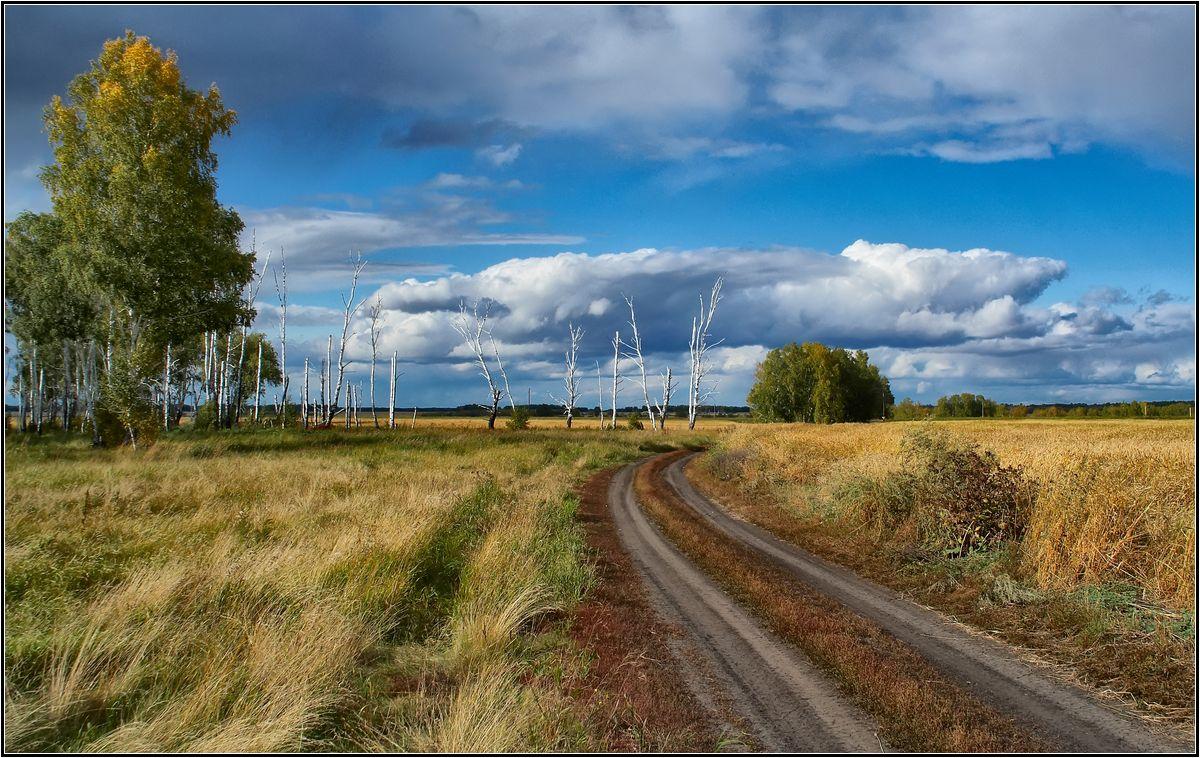 "фото ""В предвечернем свете"" метки: пейзаж, лес, осень"