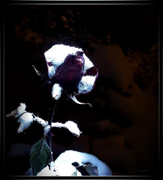 "фото ""Вот и зима"" метки: природа, разное, цветы"