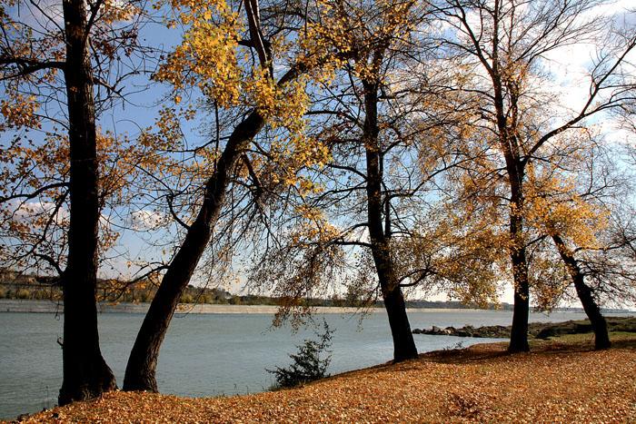 """фото """"Poplars on the river bank"""" метки: пейзаж, вода, осень"""