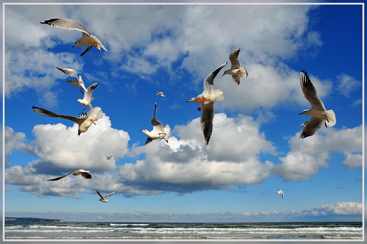 "фото ""birds"" метки: пейзаж, вода"