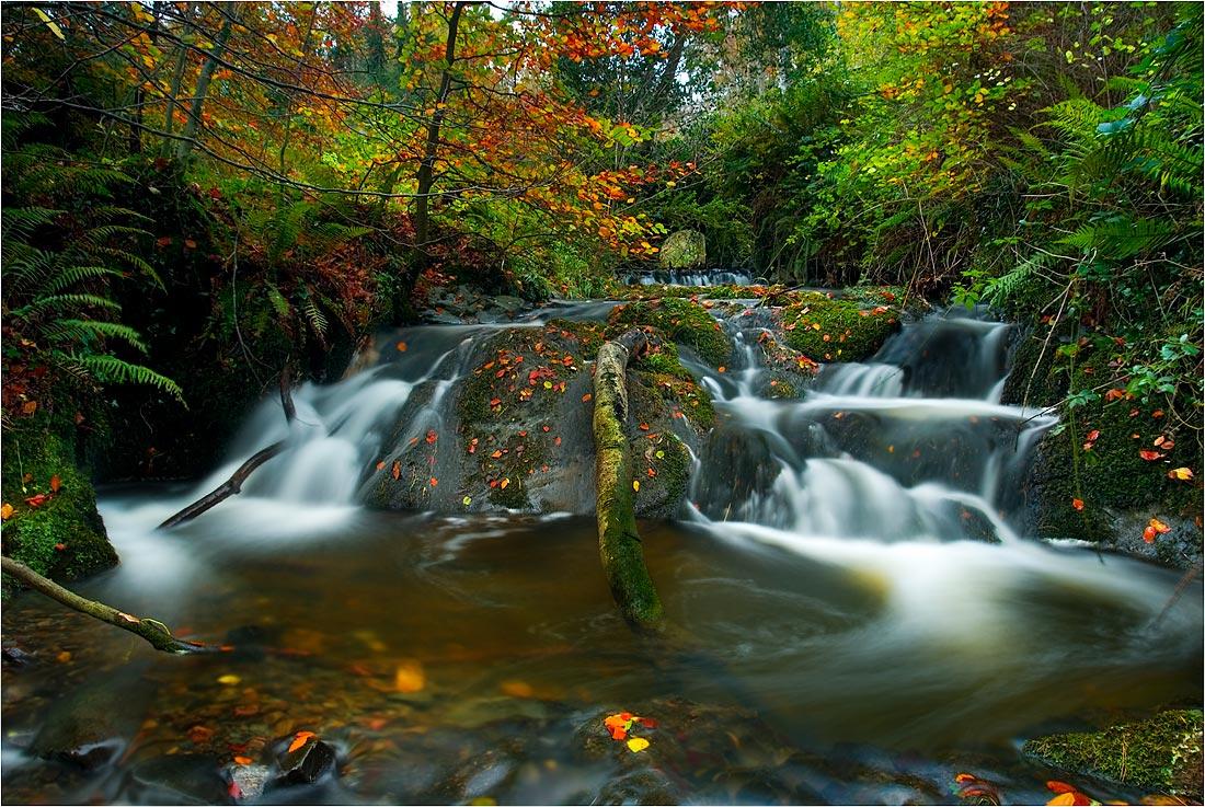 "фото ""Crawfordsburn"" метки: пейзаж, лес"