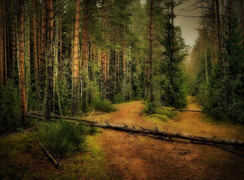"""фото """"В лесу"""" метки: пейзаж, лес"""