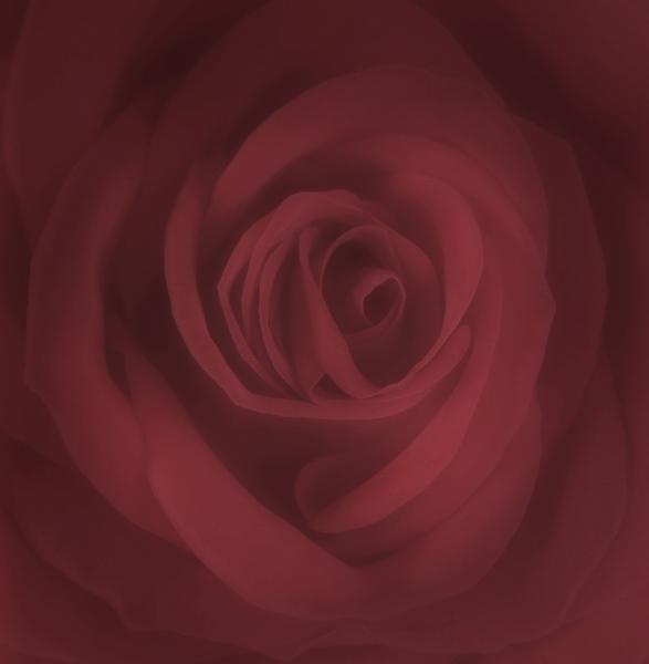 "фото ""All This Love"" метки: природа, цветы"