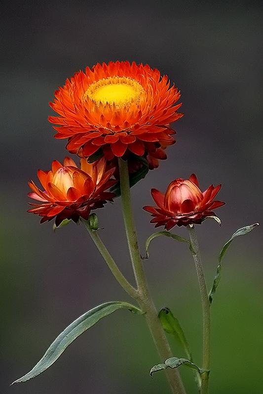 """фото """"осенний букет"""" метки: природа, цветы"""