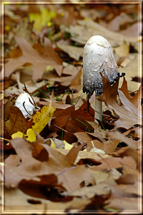 """фото """"Осень"""" метки: природа, пейзаж, осень, цветы"""