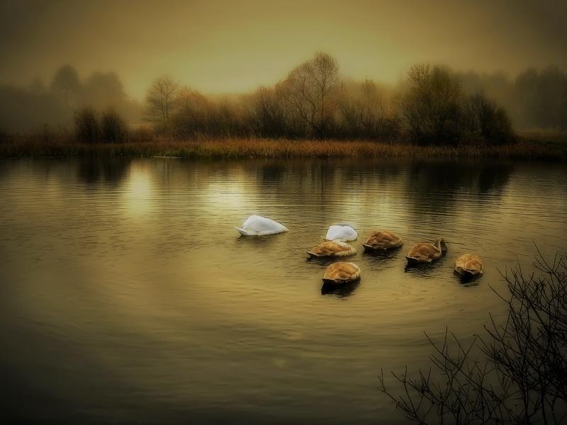 """фото """"Час молитвы"""" метки: пейзаж, вода"""
