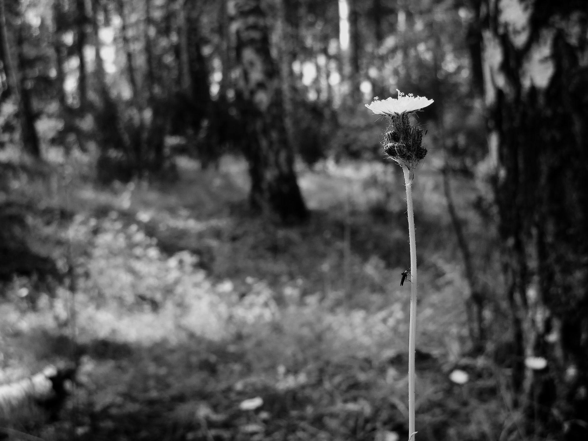 """фото """"Летняя зарисовка"""" метки: пейзаж,"""