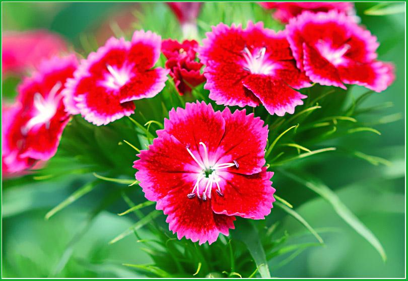 """фото """"Компания"""" метки: природа, цветы"""