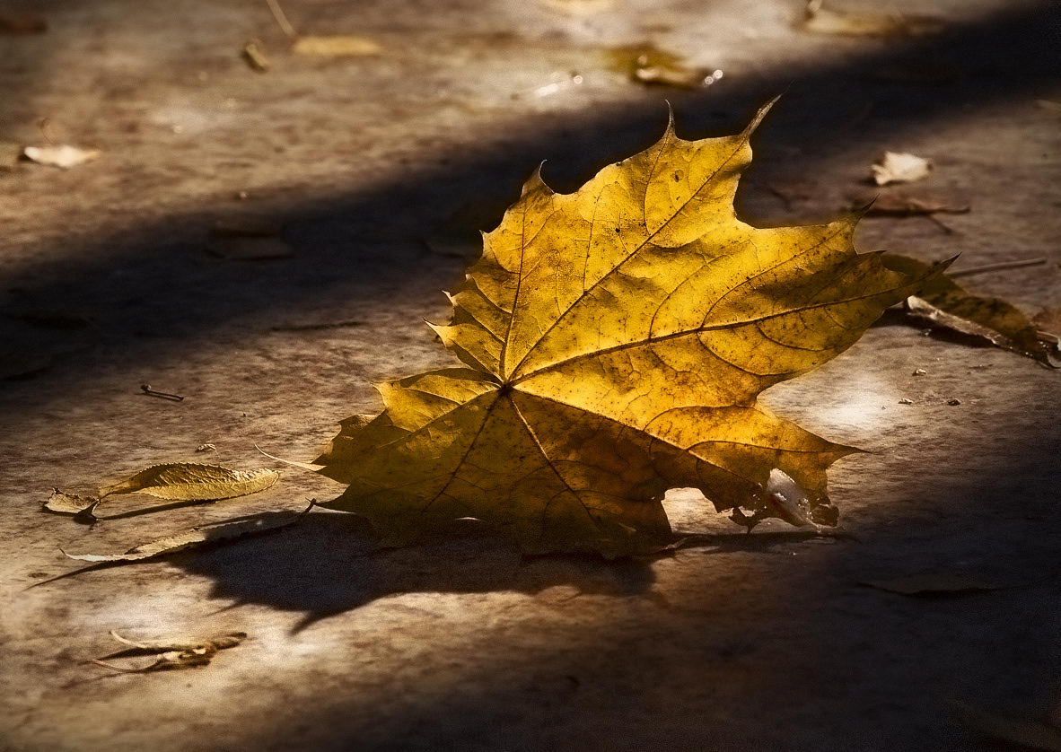 """фото """"...прощальный лист осенний..."""" метки: пейзаж, осень"""