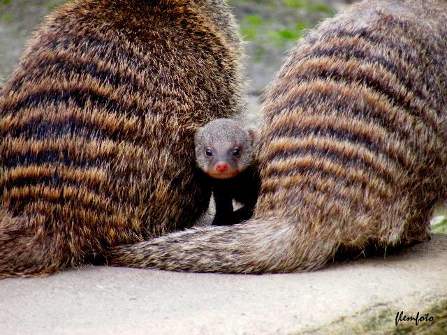 """фото """"Picture today."""" метки: природа, дикие животные"""