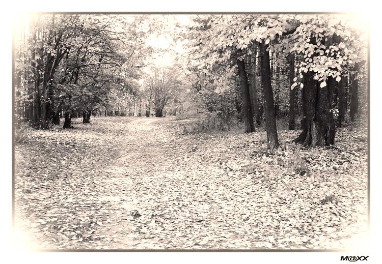 """фото """"#"""" метки: пейзаж, черно-белые, лес"""