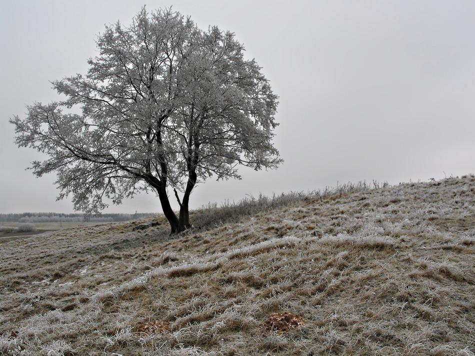 """фото """"Иней"""" метки: пейзаж, зима"""