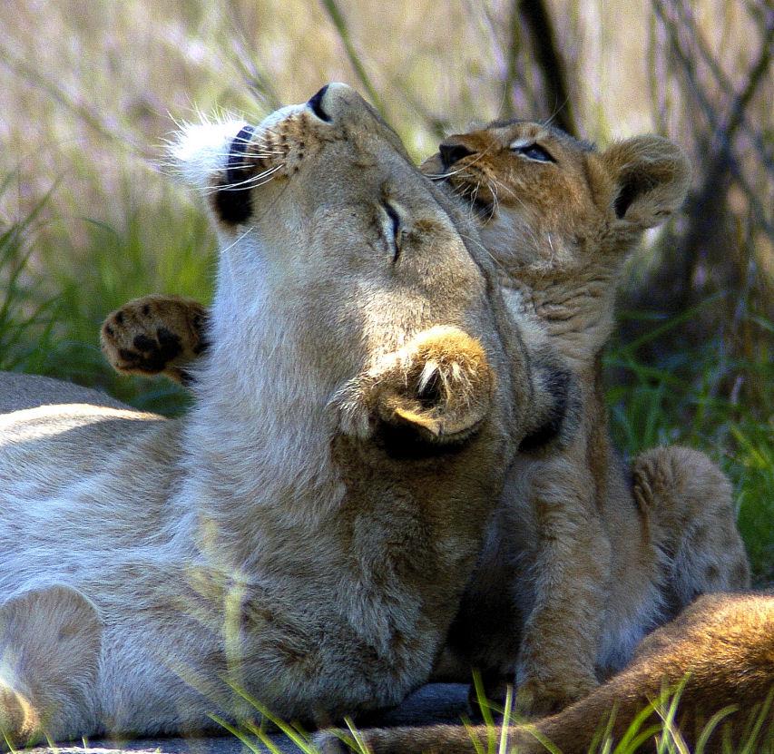 """фото """"All forgiven"""" метки: природа, дикие животные"""