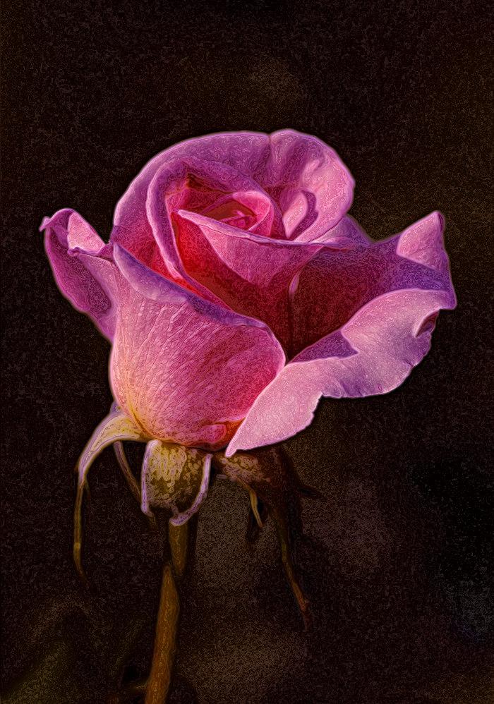 """фото """"Все равно ты будешь несчастна..."""" метки: природа, цветы"""