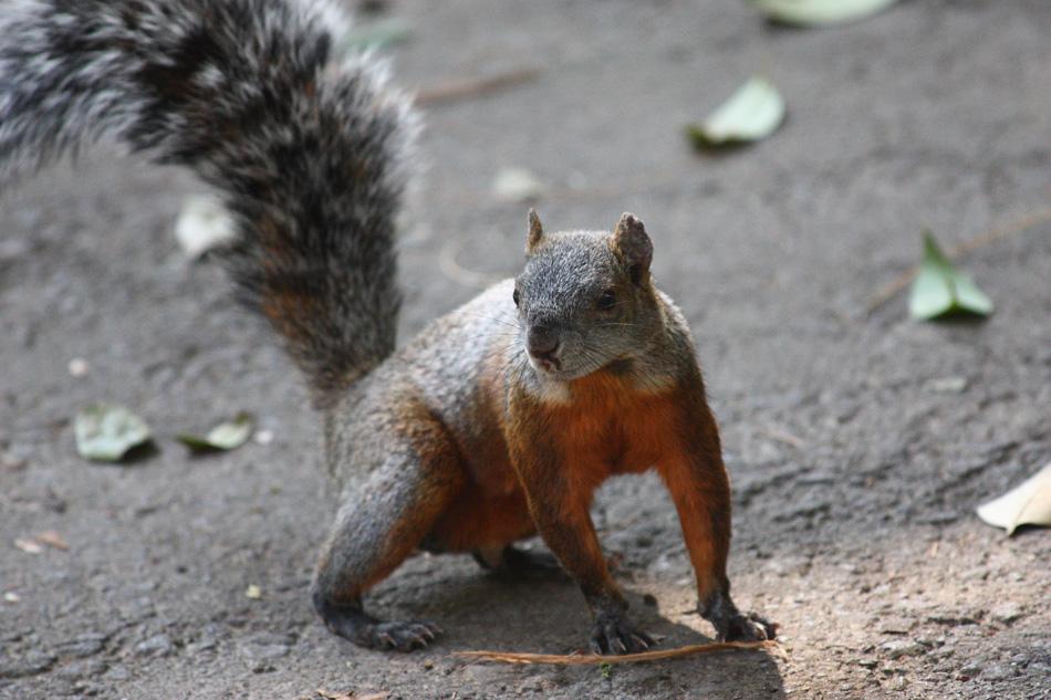 """фото """"Sorpresa"""" метки: природа, репортаж, домашние животные"""