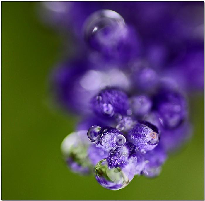 """фото """"Bug Eyes"""" метки: природа, макро и крупный план, цветы"""