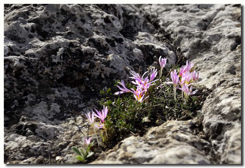 "фото ""Подлески"" метки: природа, цветы"