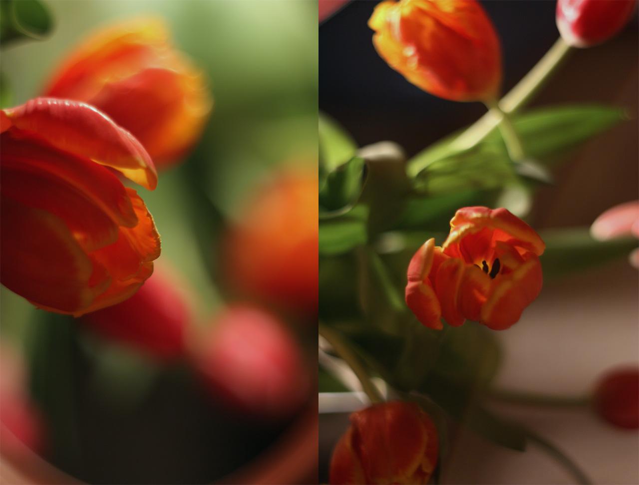 """фото """"подарки"""" метки: природа, цветы"""
