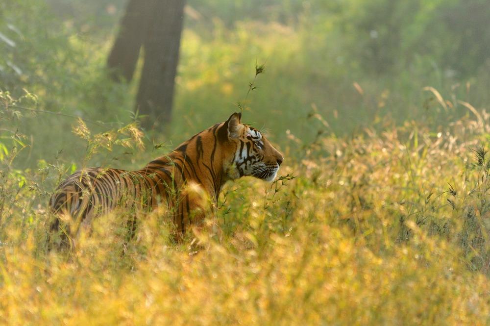 """фото """"Рожденный свободным"""" метки: природа, дикие животные"""