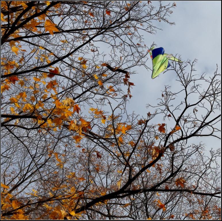 """фото """"Конец сезона"""" метки: пейзаж, город, осень"""