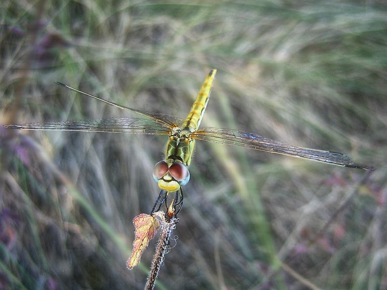 """фото """"warriors of the river"""" метки: природа, макро и крупный план, насекомое"""