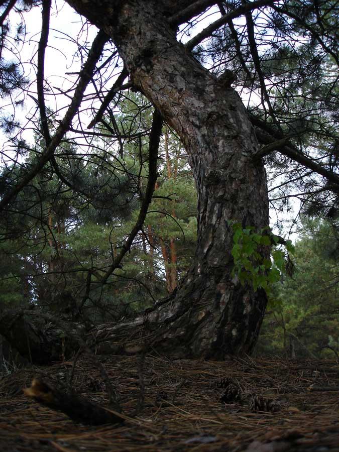 """фото """"Великан"""" метки: пейзаж, лес, осень"""