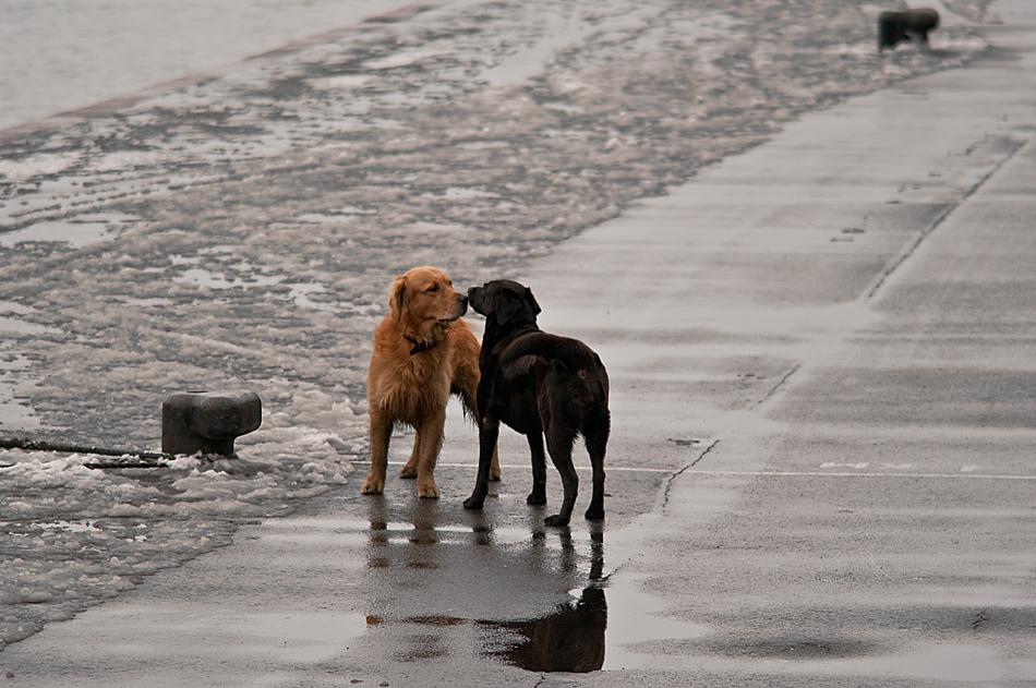 """фото """"у берега Невы"""" метки: природа, домашние животные"""