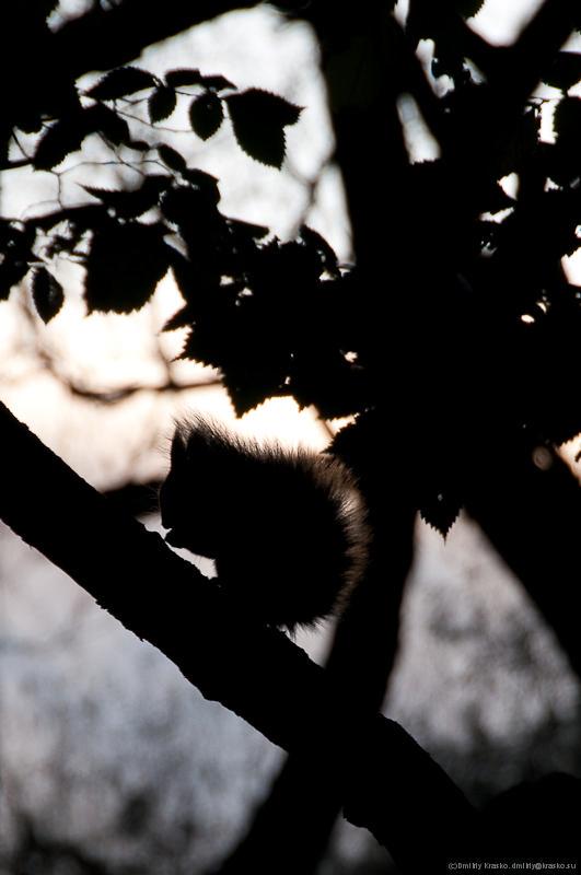 """фото """"Осенняя белка"""" метки: пейзаж, природа, дикие животные, осень"""