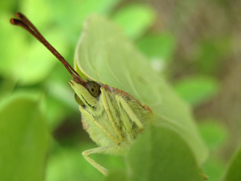 """фото """"Макровзгляд на микро"""" метки: природа, макро и крупный план, насекомое"""