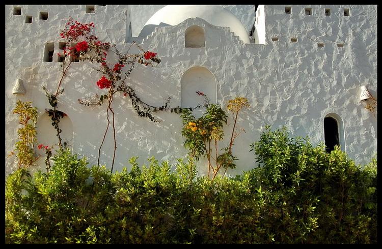 """фото """"The wall"""" метки: природа, фрагмент, цветы"""