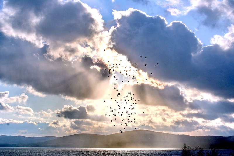 """фото """"Последний перелет"""" метки: пейзаж, природа, дикие животные, облака"""