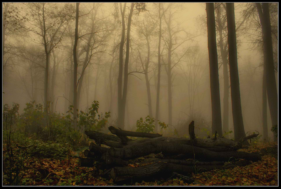 """фото """"Утро в лесу..."""" метки: пейзаж, осень"""