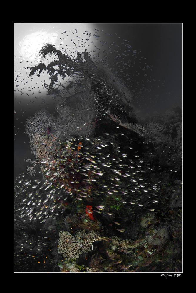 """фото """"""""В темно-синем лесу ..."""""""" метки: подводные,"""