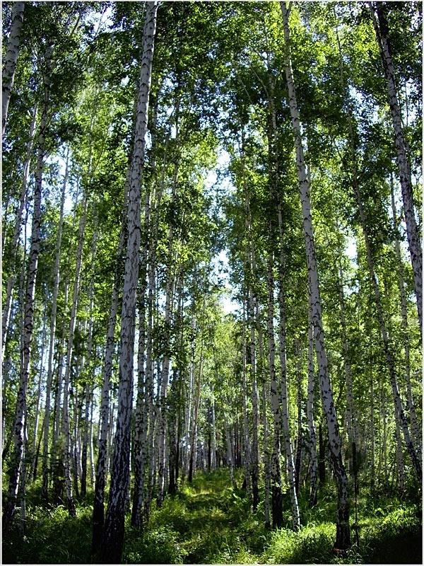 """фото """"Тропинка..."""" метки: пейзаж, лес"""
