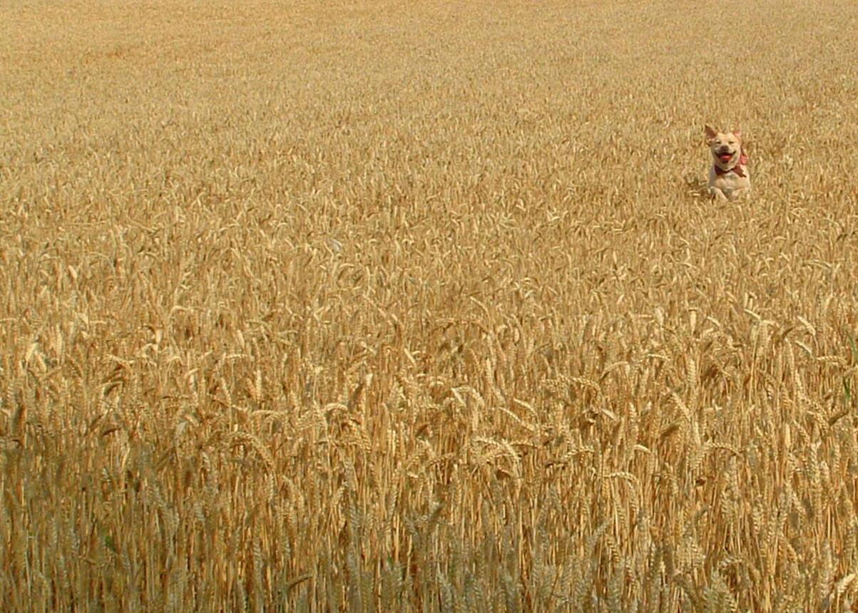 """фото """"Find the dog?"""" метки: природа, пейзаж, домашние животные"""