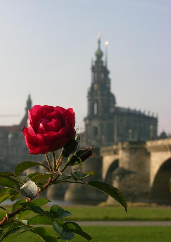 """фото """"Дрезденская роза"""" метки: путешествия, архитектура, пейзаж, Европа"""